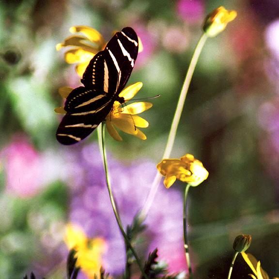 541d19f3b3f63adf1e1e8ca1_butterflies.png