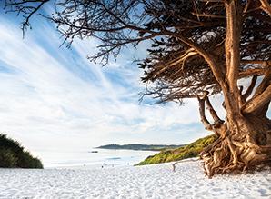 5373fece8226ff1c2aca5227_Carmel_Beach_Cypress_Tree.jpg
