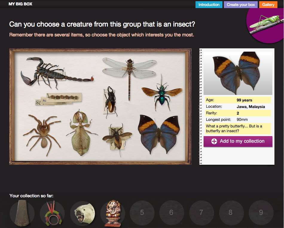 A selection of different insects within a display and a factfile of a butterfly