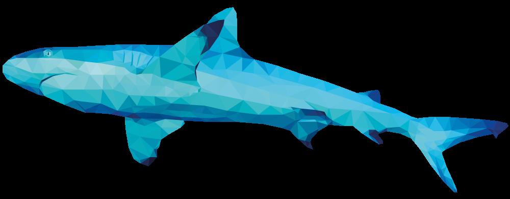 54075f6fb4ba23e511501d2b_shark.png