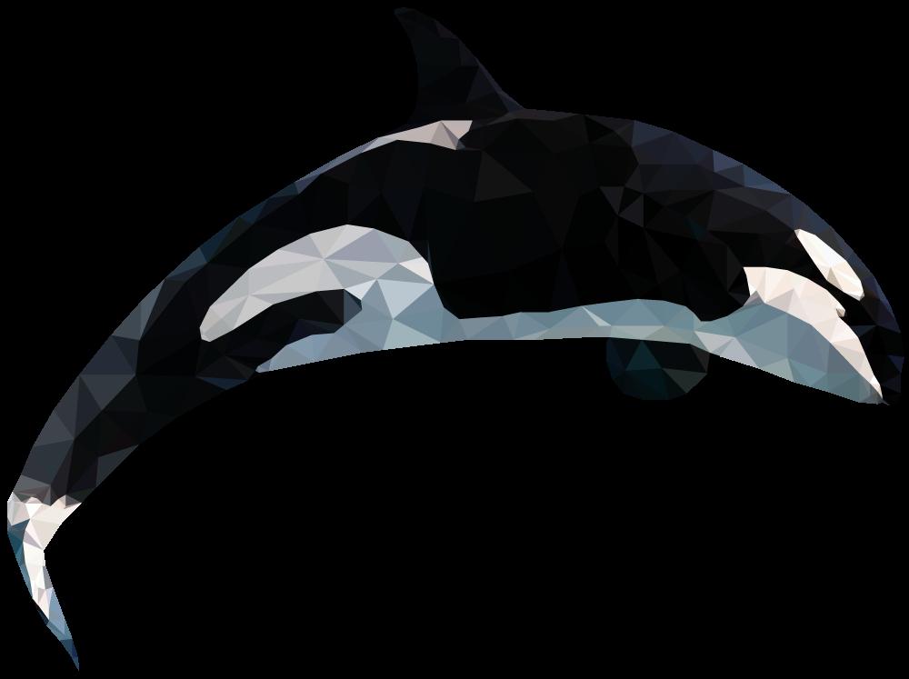 54075f849e1d5d7a337c16ec_whale.png