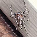Rhode Island Spider Control