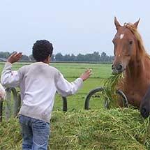 De Noord-Hollandse Bauwe Zorgboerderij