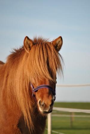 Zorg & Paard