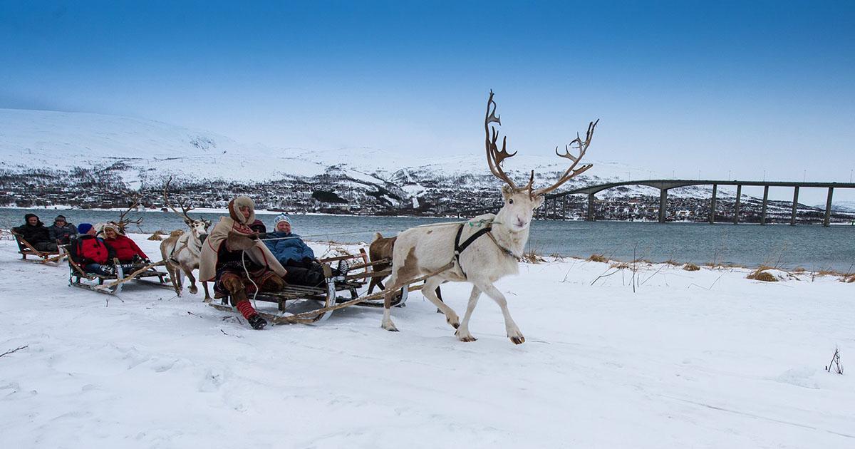 Tromsø Lapland - Reindeer Sledding Activity and Saami experience
