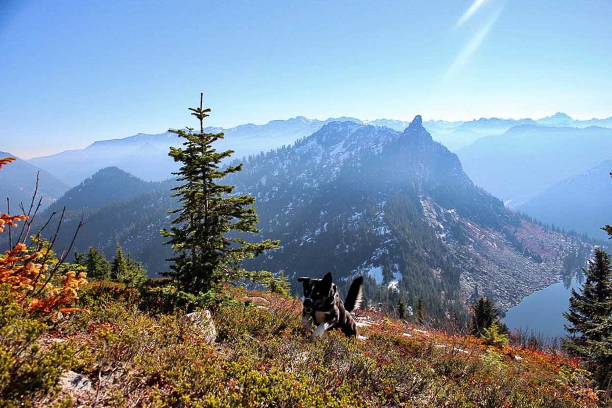 Ragknarr dog running up Mount McCausland