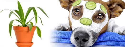 Clasificados; plantas y mascotas.