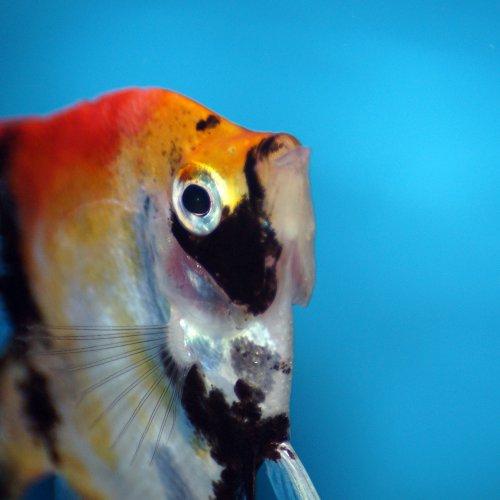Foto van een vis