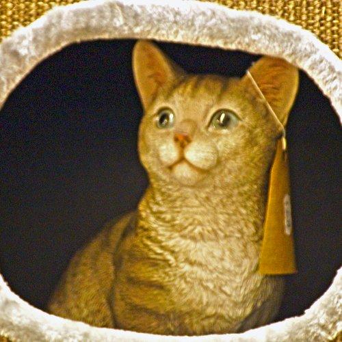 Schilderij van een kat