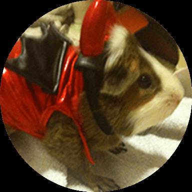 Spot guinea pigs