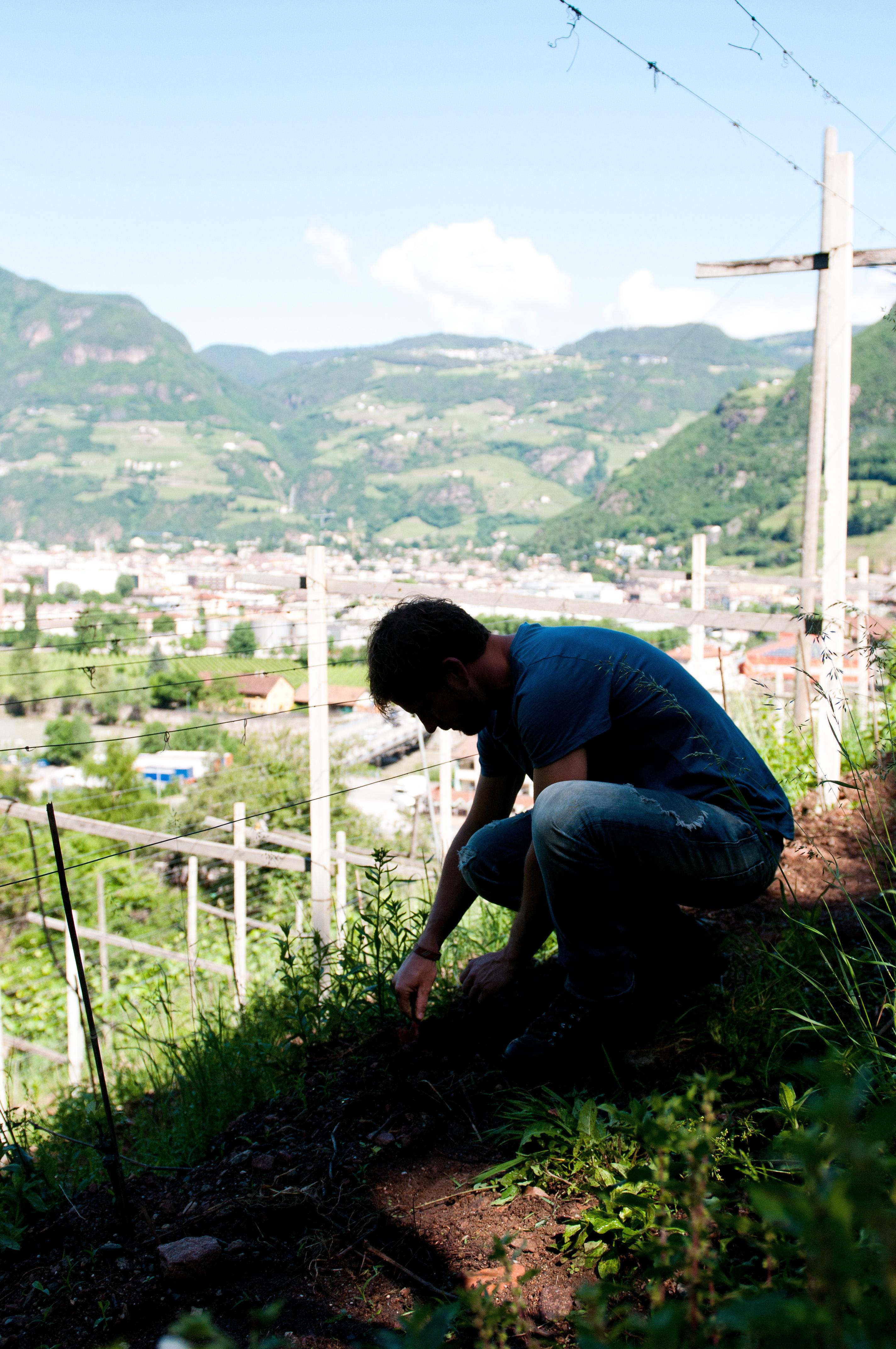 Freistil Pranzegg Planting Wines