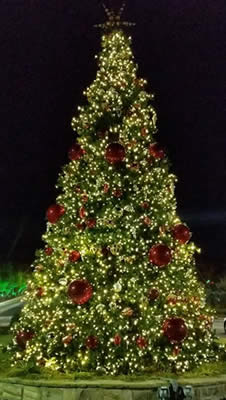 Commercial Property Christmas Trees