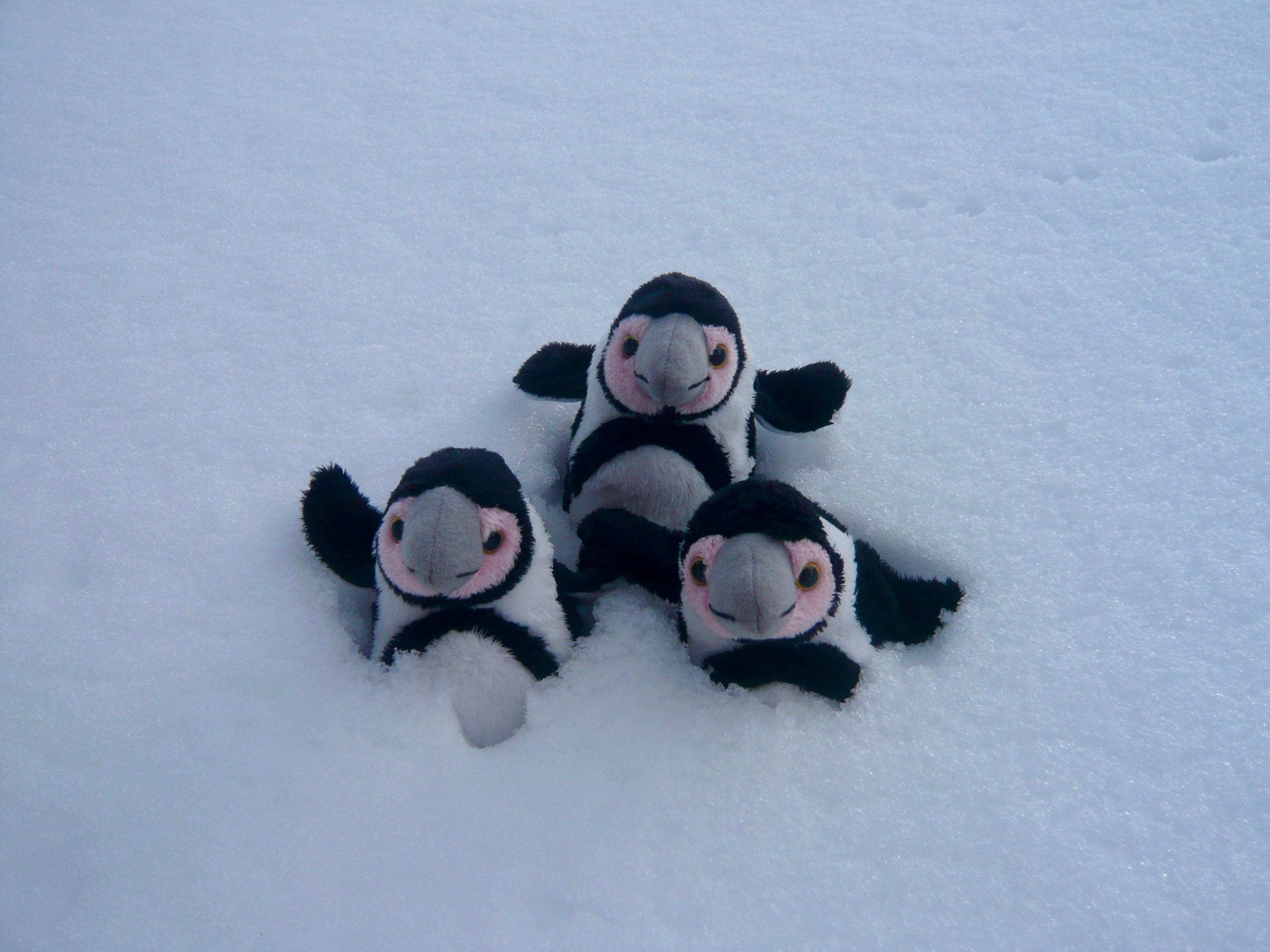 Penguin Flipper Tips!