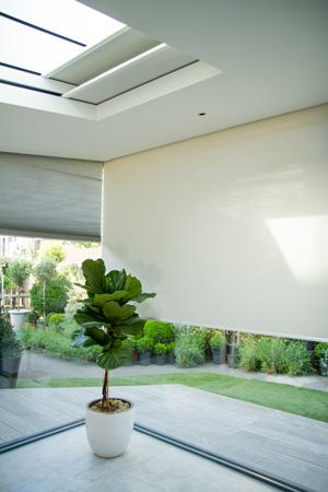 Hidden blinds in shaped window and skylight window