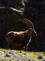 Walking, trekking, snowshoeing, Chamonix, French Alps. Image courtesy www.hemsleyphotography.co.uk