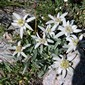 Alpine flowers, butterflies, chamois, ibex, marmots, vultures - they're all out there!