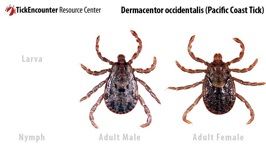 tick species