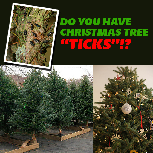 "Do You Have Christmas Tree ""TICKS""?"