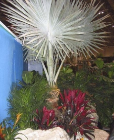 Judith Wright wins Outstanding Use of Interior Plants award at Canada Blooms 2012