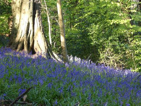 Millennium wood walk