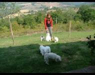 Bis Napoli 2011